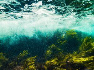 water, sea, ocean-4641424.jpg